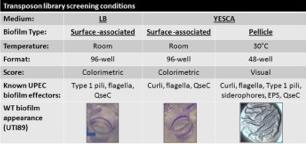 biofilms under different conditions